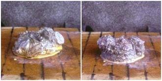 ウメモドキ 斑入り富士 2