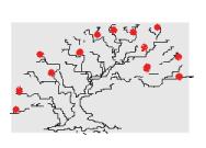 黄金比による模様木の樹高と葉張り
